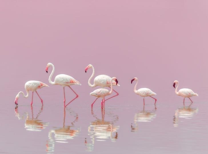 تصاویر بینظیر و بسیار زیبای سال ۲۰۱۸ به انتخاب نشنال جئوگرافیک